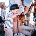 Petting Zoo in Kids Zone